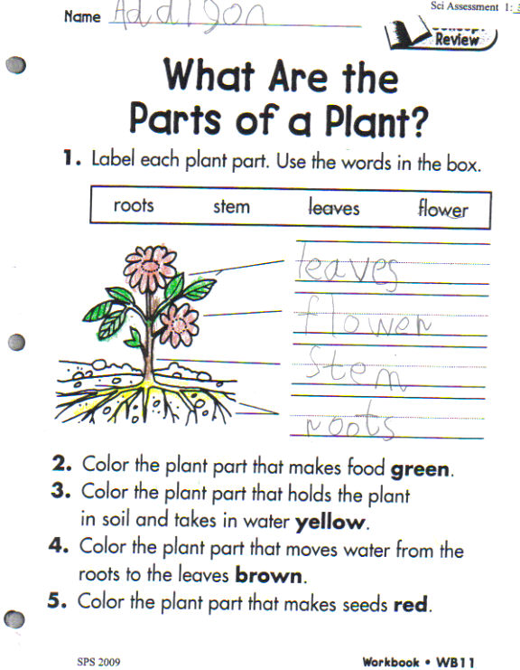 Plant Cycle Tiffany Wood 39 S Education Blog